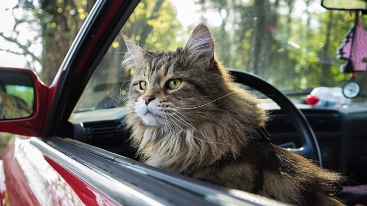 A Road Trip with Your Cat? Why not!